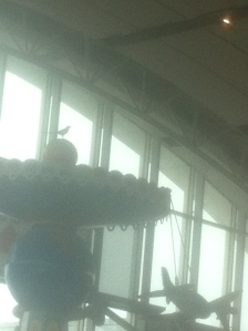 Magpie at the Calgary Airport